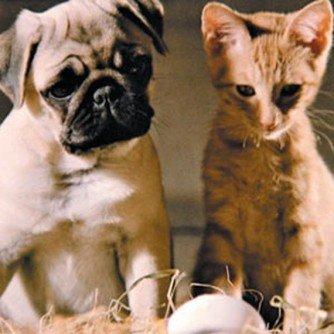 Milo from Milo and Otis